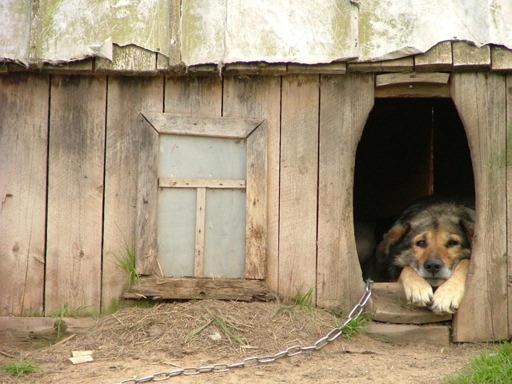 Την πλάτη στα αδέσποτα ζώα γύρισε επιδεικτικά ο Δήμος Νέας Ιωνίας